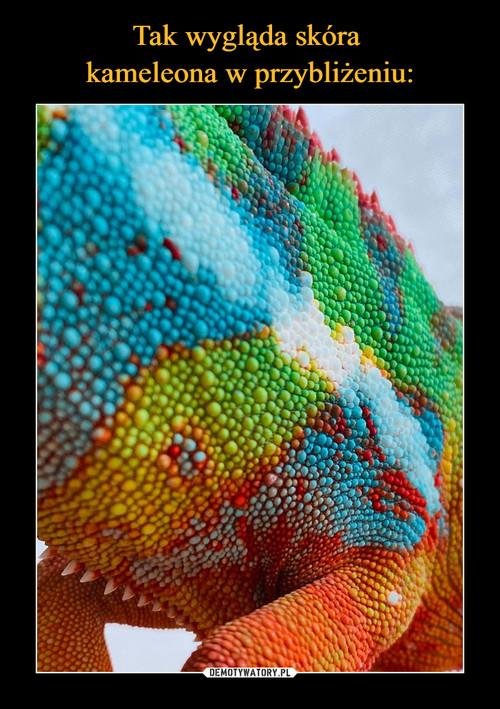 Tak wygląda skóra  kameleona w przybliżeniu: