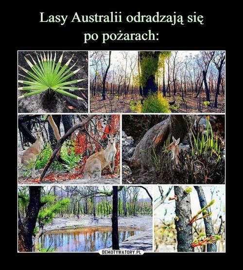 Lasy Australii odradzają się po pożarach: