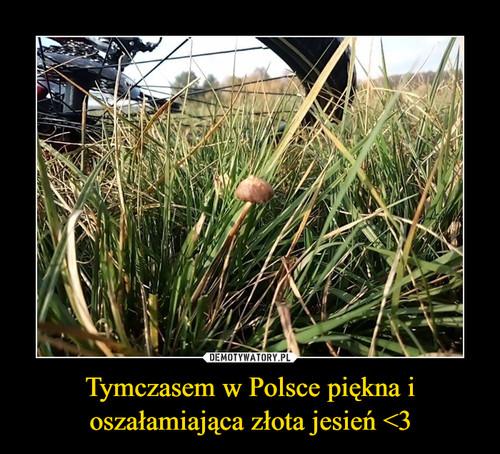 Tymczasem w Polsce piękna i oszałamiająca złota jesień <3