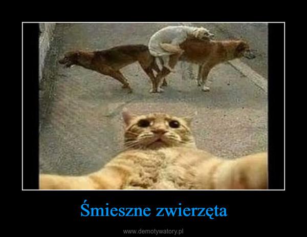 Śmieszne zwierzęta –