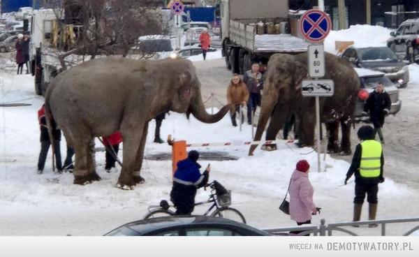 Przewijaj dalej, to tylko słonie spacerujące po ulicy. –