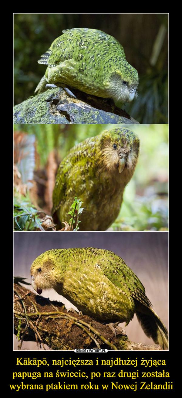 Kākāpō, najcięższa i najdłużej żyjąca papuga na świecie, po raz drugi została wybrana ptakiem roku w Nowej Zelandii –