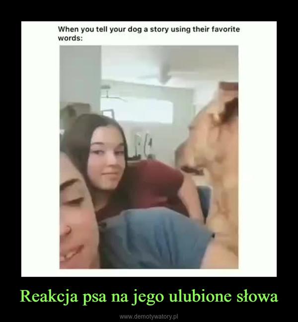 Reakcja psa na jego ulubione słowa –