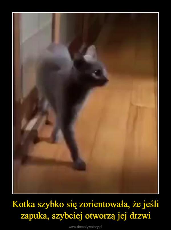Kotka szybko się zorientowała, że jeśli zapuka, szybciej otworzą jej drzwi –