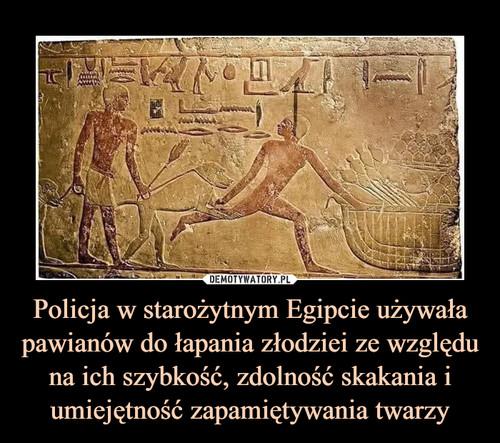 Policja w starożytnym Egipcie używała pawianów do łapania złodziei ze względu na ich szybkość, zdolność skakania i umiejętność zapamiętywania twarzy