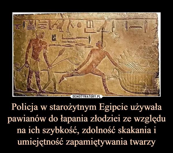 Policja w starożytnym Egipcie używała pawianów do łapania złodziei ze względu na ich szybkość, zdolność skakania i umiejętność zapamiętywania twarzy –