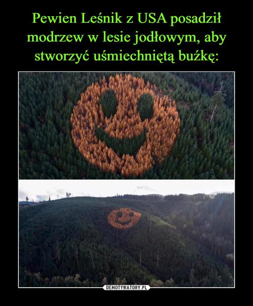 Pewien Leśnik z USA posadził modrzew w lesie jodłowym, aby stworzyć uśmiechniętą buźkę: