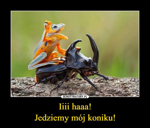 Iiii haaa!Jedziemy mój koniku! –
