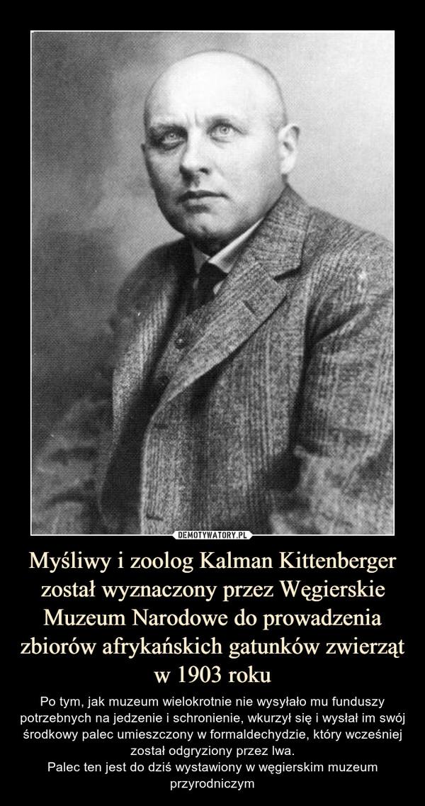 Myśliwy i zoolog Kalman Kittenberger został wyznaczony przez Węgierskie Muzeum Narodowe do prowadzenia zbiorów afrykańskich gatunków zwierząt w 1903 roku – Po tym, jak muzeum wielokrotnie nie wysyłało mu funduszy potrzebnych na jedzenie i schronienie, wkurzył się i wysłał im swój środkowy palec umieszczony w formaldechydzie, który wcześniej został odgryziony przez lwa.Palec ten jest do dziś wystawiony w węgierskim muzeum przyrodniczym