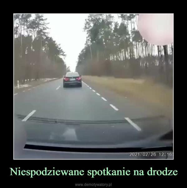 Niespodziewane spotkanie na drodze –