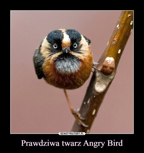 Prawdziwa twarz Angry Bird