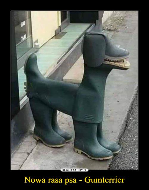 Nowa rasa psa - Gumterrier