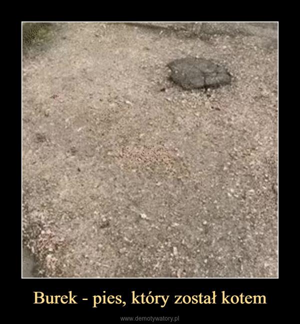 Burek - pies, który został kotem –