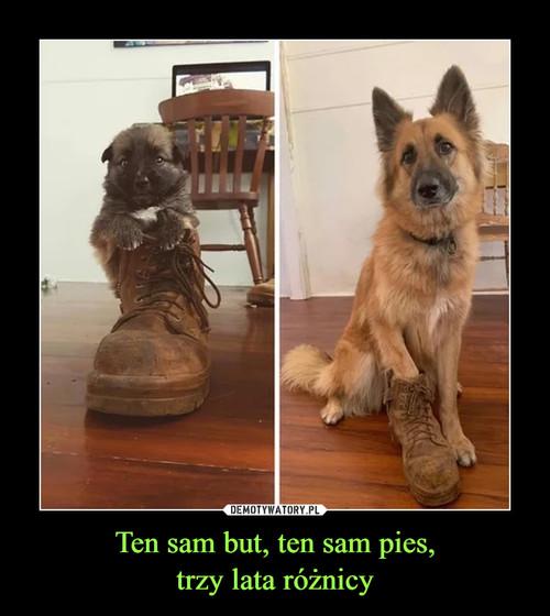 Ten sam but, ten sam pies, trzy lata różnicy