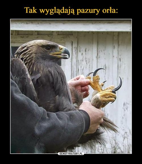 Tak wyglądają pazury orła: