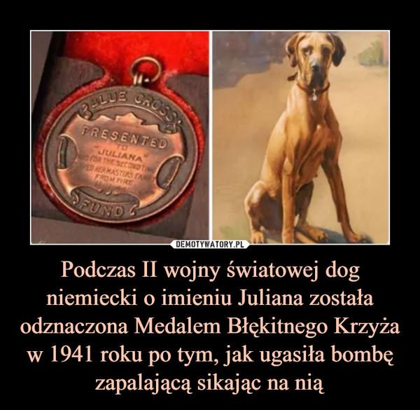 Podczas II wojny światowej dog niemiecki o imieniu Juliana została odznaczona Medalem Błękitnego Krzyża w 1941 roku po tym, jak ugasiła bombę zapalającą sikając na nią –