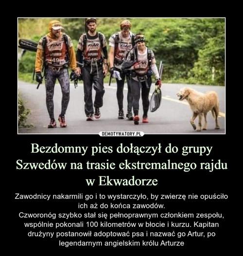 Bezdomny pies dołączył do grupy Szwedów na trasie ekstremalnego rajdu w Ekwadorze