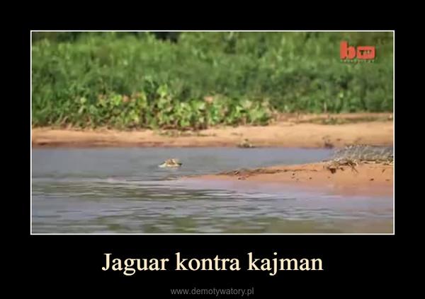 Jaguar kontra kajman –