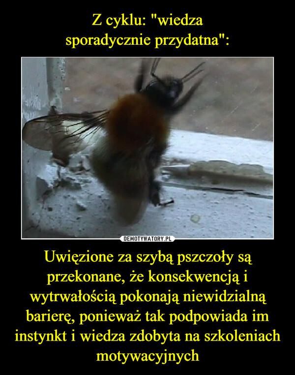 """Z cyklu: """"wiedza sporadycznie przydatna"""": Uwięzione za szybą pszczoły są przekonane, że konsekwencją i wytrwałością pokonają niewidzialną barierę, ponieważ tak podpowiada im instynkt i wiedza zdobyta na szkoleniach motywacyjnych"""