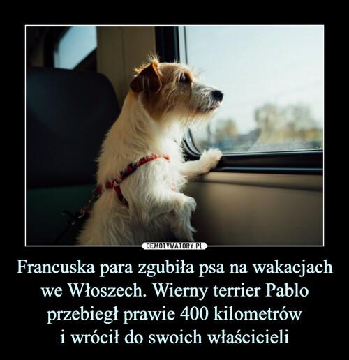 Francuska para zgubiła psa na wakacjach we Włoszech. Wierny terrier Pablo przebiegł prawie 400 kilometrów i wrócił do swoich właścicieli