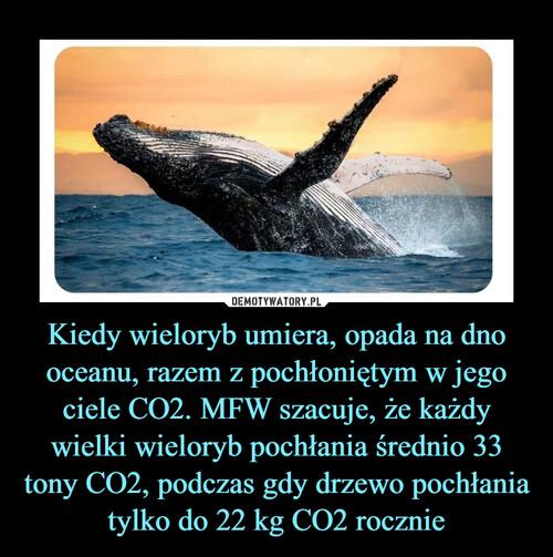 Kiedy wieloryb umiera, opada na dno oceanu, razem z pochłoniętym w jego ciele CO2. MFW szacuje, że każdy wielki wieloryb pochłania średnio 33 tony CO2, podczas gdy drzewo pochłania tylko do 22 kg CO2 rocznie