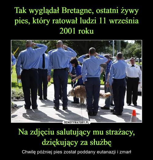 Tak wyglądał Bretagne, ostatni żywy pies, który ratował ludzi 11 września 2001 roku Na zdjęciu salutujący mu strażacy, dziękujący za służbę