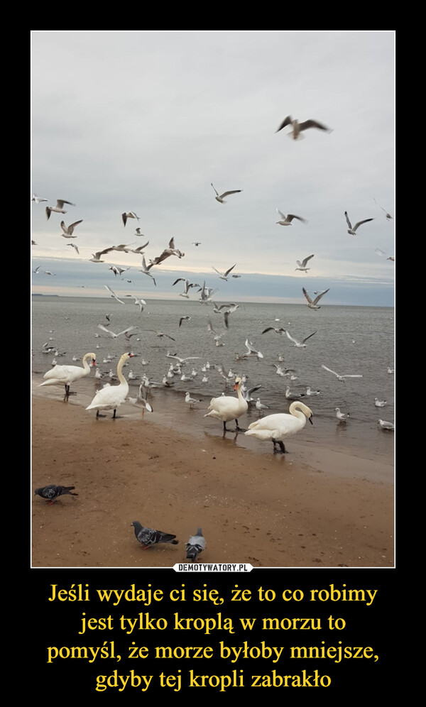 Jeśli wydaje ci się, że to co robimyjest tylko kroplą w morzu topomyśl, że morze byłoby mniejsze,gdyby tej kropli zabrakło –