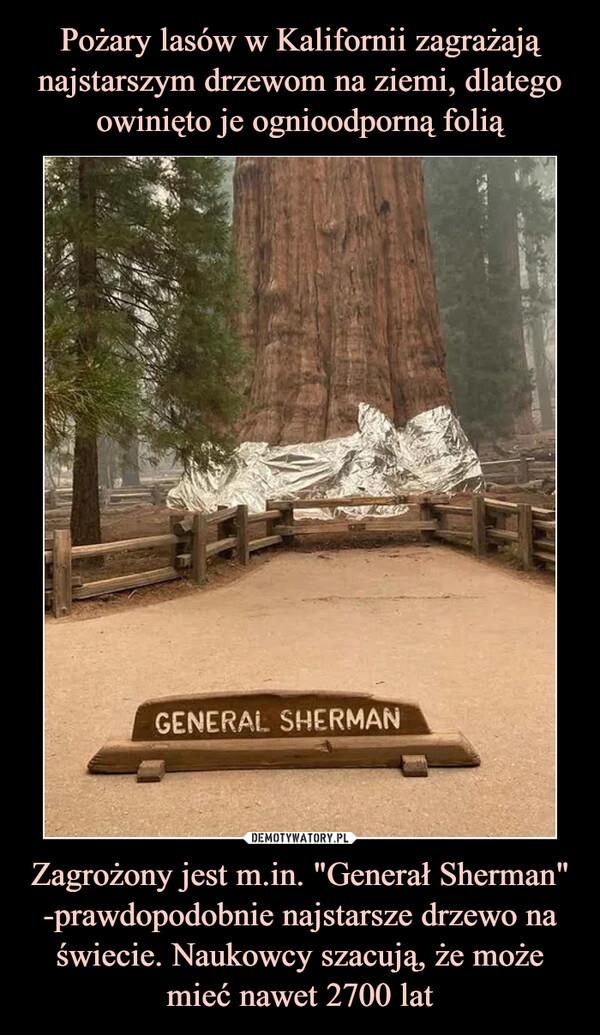 """Zagrożony jest m.in. """"Generał Sherman"""" -prawdopodobnie najstarsze drzewo na świecie. Naukowcy szacują, że może mieć nawet 2700 lat –"""