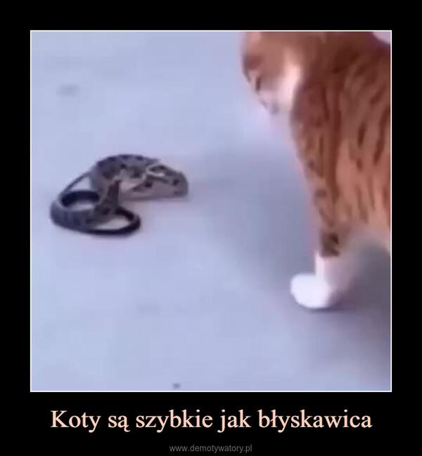 Koty są szybkie jak błyskawica –