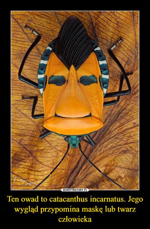 Ten owad to catacanthus incarnatus. Jego wygląd przypomina maskę lub twarz człowieka