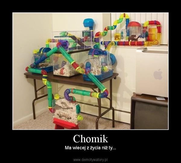 Из чего сделать домик хомяку в домашних условиях