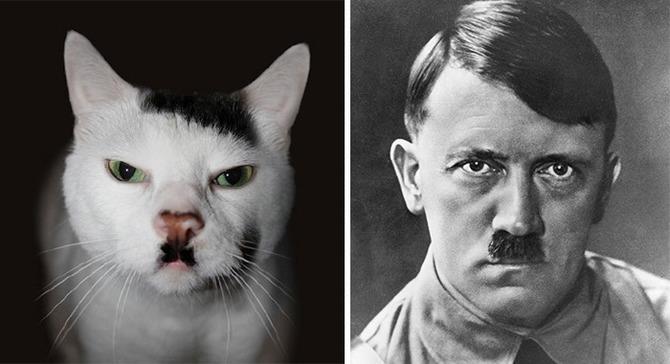 Czasami Mój Kot Mnie Naprawdę Przeraża Demotywatorypl